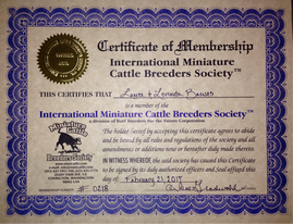 IMCBR International Miniature Cattle Breeders Society and Registry of Mini Jersey cows and Scottish Highlands