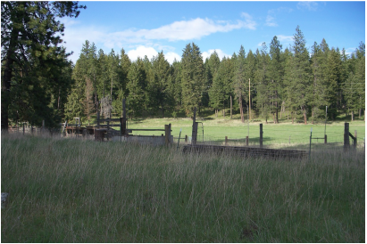Mini Jersey pasture in north Idaho at North Woods Homestead